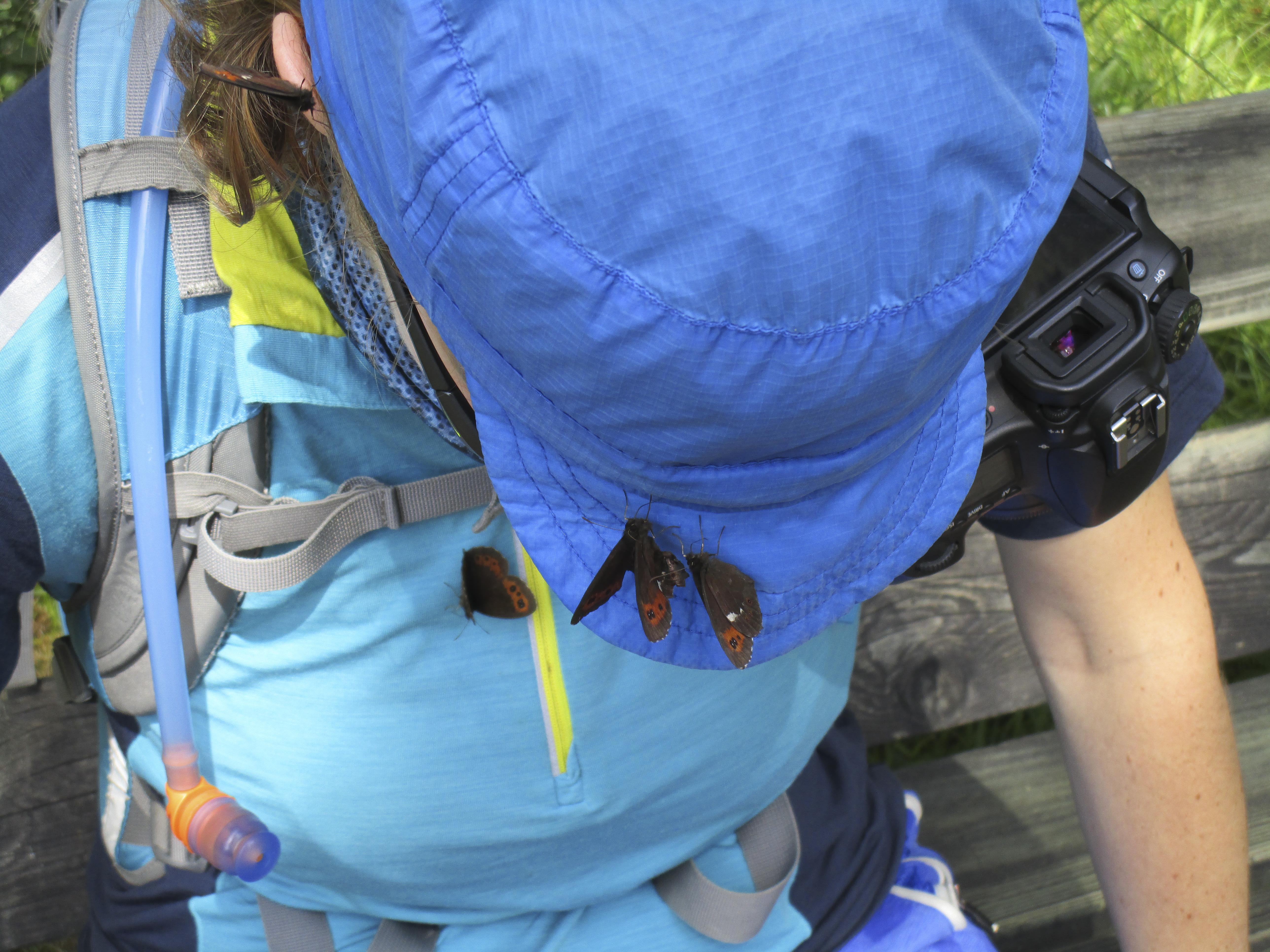 Blau sind alle meine Kleider (oder wie man am besten Schmetterlinge anlockt)