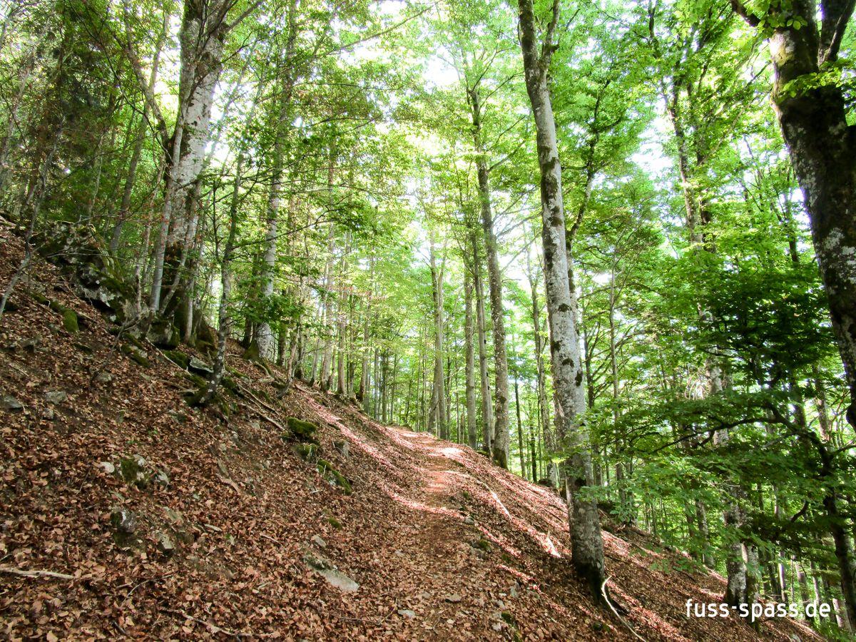 Tour: Der Schatz vom Silberberg (Schwarzwald)